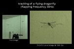 tracking of a flying dragonfly